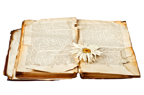 Homeopathic and Herbal Terms List