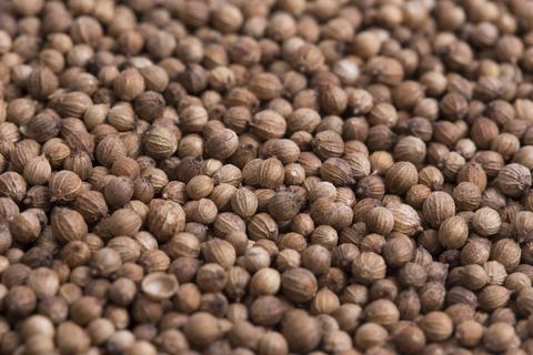 coriander co2 extract 3