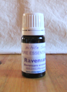 Ravensare Essential Oil