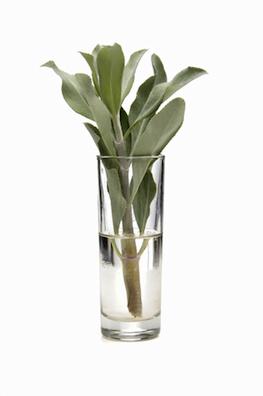 white sage essential oil 3
