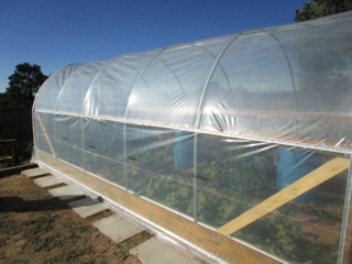 Winter Garden Veggies in Hoop House