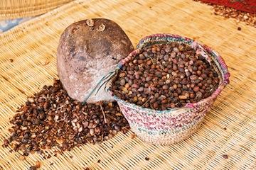 argan botanical oil