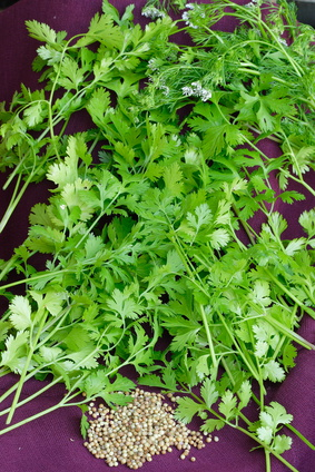 Parsley Seed Essential Oil