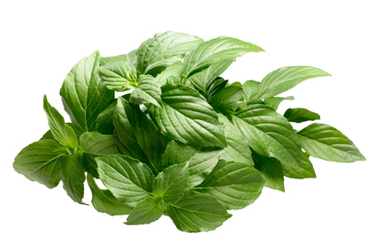 Lemon basil essential oil 2