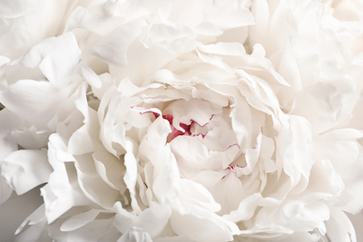 White Peony Flower Essence